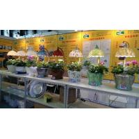 Quality T5 grow seedling light for sale