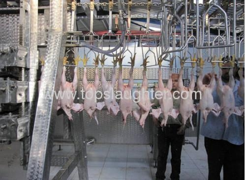 Buy Chicken processing equipment chicken plucking machine at wholesale prices