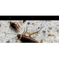 Buy cheap bug exterminators from wholesalers