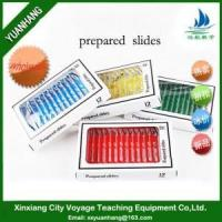 Buy 12pcs Plastic Prepared Microscope Slides at wholesale prices