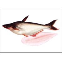 China Frozen Pangasius Fillet on sale